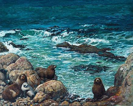 Seals by Peter Jean Caley