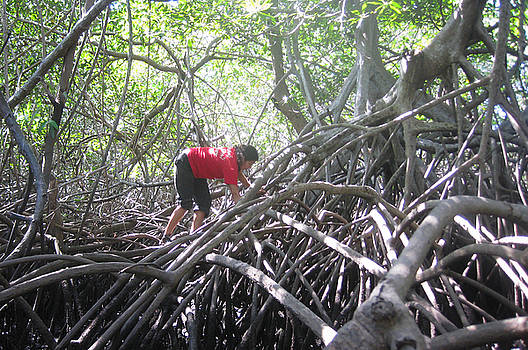 Gloria - Searching for Clams in the Mangroves