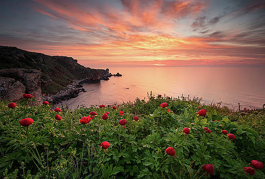 Seascape with peonies by Evgeni Ivanov