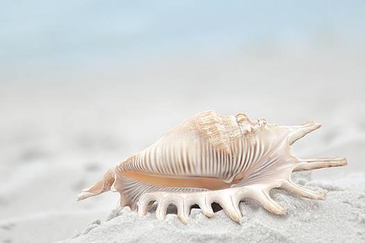 Seashell #1 by Emma Lucas