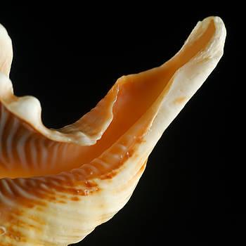 Rolf Bertram - Seashell 20090820 9
