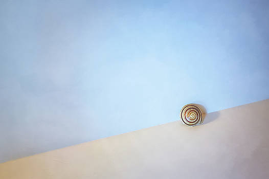 Seashell by the Seashore by Scott Norris