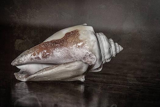 Seashell by Jerri Moon Cantone