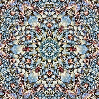 Seashell Kaleidoscope by Cindi Ressler
