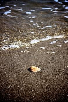 Seashell by Kasia Blaszczyk