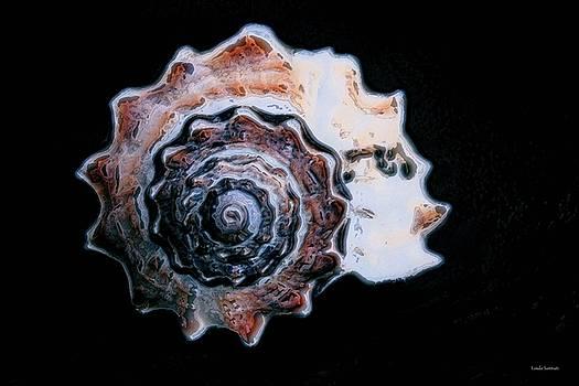 Seashell by Linda Sannuti