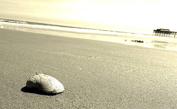 Seashell Serenity by Joey OConnor