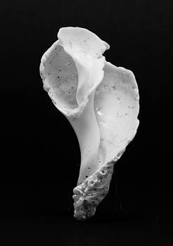 Seashell by Simon Pocklington