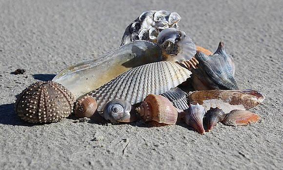Seashell Treasures by Rosanne Jordan