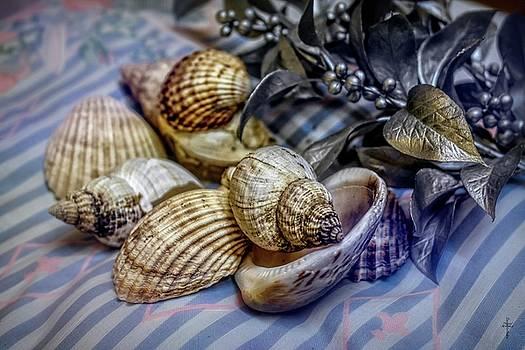 Seashells by Daniel Arrhakis