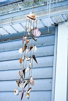 Seashells in Winter by Heather S Huston
