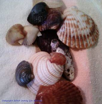 Seashells by Jamey Balester