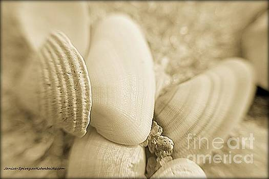 Seashells by Janice Spivey