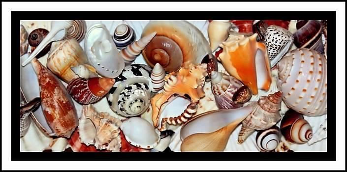 Rosanne Jordan - Seashells Seashells