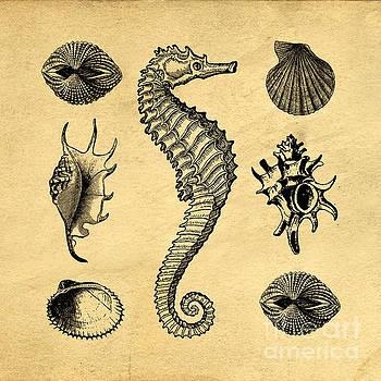 Seashells Vintage by Edward Fielding