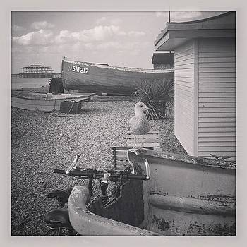 #seaside #seagull #blackandwhite #beach by Natalie Anne