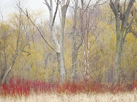 Season Change  by Lori Frisch