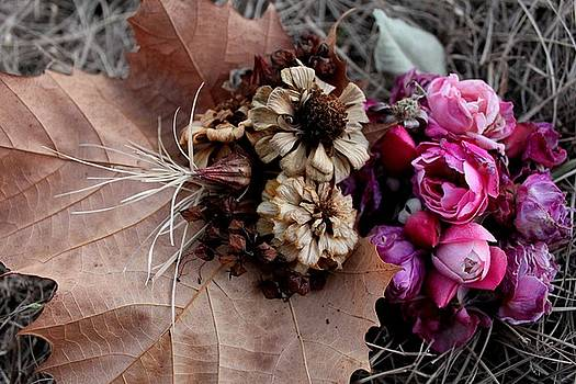 Seasons Collide by Maria Young