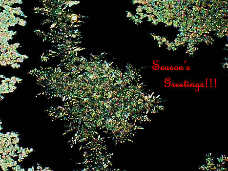 Michelle  BarlondSmith - Seasons Greetings Frost Card