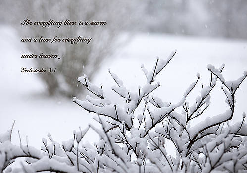 Seasons  by Laura Greene