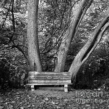 Seat For Three by Patrick M Lynch