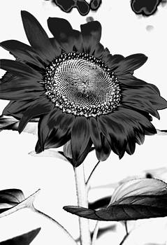 Heather Kirk - Seattle Sunflower BW Invert - Stronger