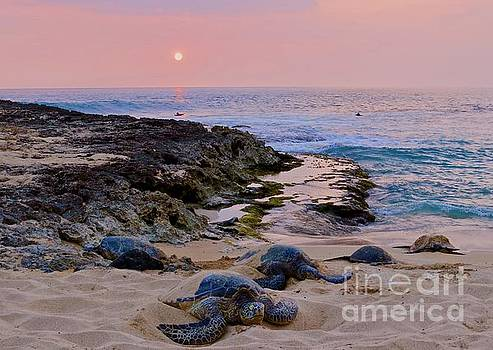 Seaturtle Resting in Safety by Craig Wood