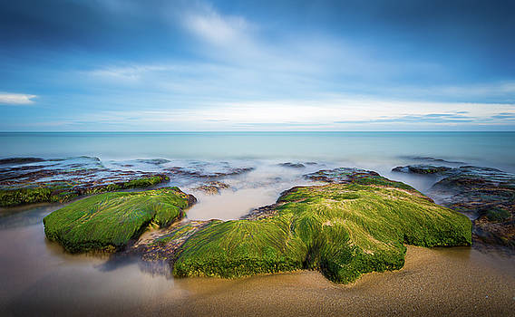 Seaweed Covered. by Gary Gillette