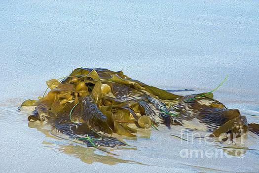Seaweed  by Leah McPhail