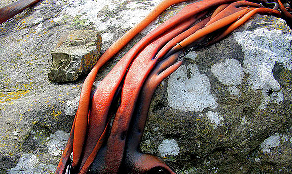 Seaweed on Rock with Lichen by Nareeta Martin
