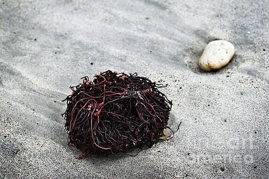 Seaweed Roots by Henrik Lehnerer
