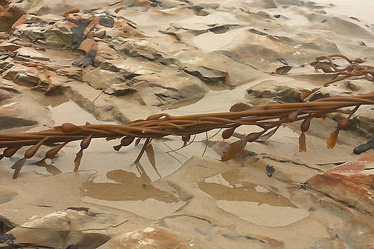 Art Block Collections - Seaweed Rope