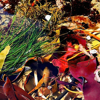 Art Block Collections - Seaweed Salad