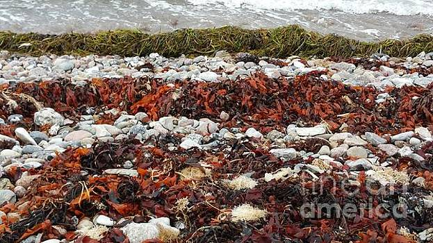 Seaweed by Susanne Baumann