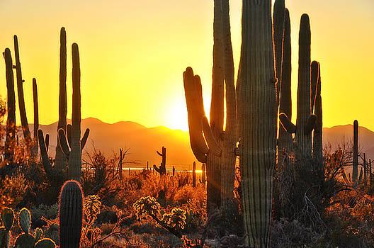 Second Sunset at Saguaro by John Hoffman