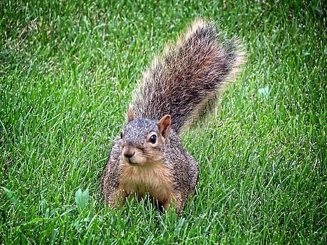 Kyle West - Secret Squirrel
