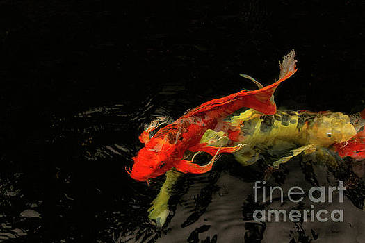 Secret to Happy Koi by Marilyn Cornwell