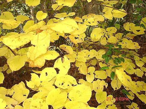 Secret Yellow by Martha Roehrick