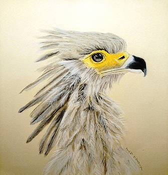 Secretary Bird by Joan Mansson