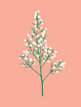 Seeds - Blush by David Lange