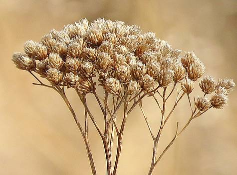 Seeds of Gold by Lori Frisch