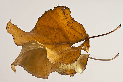 Sandra Foster - Seeing Double Autumn Leaf