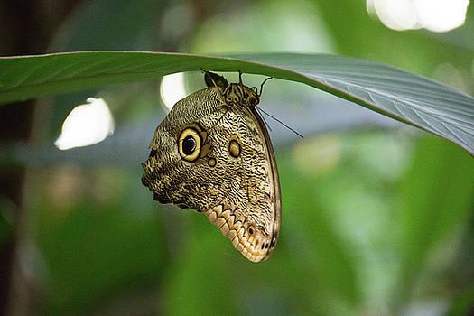 Seeing Eye Butterfly by Michael Bessler