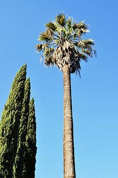 Seeking Beverly Hills Representation by Todd Sherlock