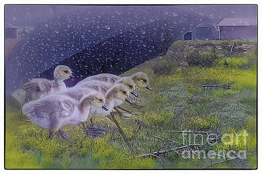 Seeking Shelter From The Storm Digital Artwork by Mary Lou Chmur by Mary Lou Chmura