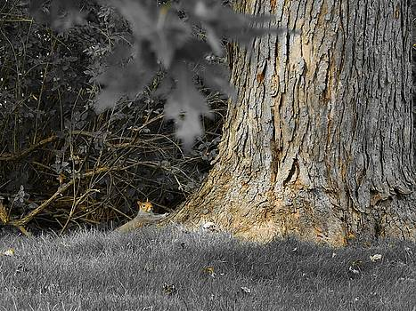 Selective Colors Squirrel by Gothicrow Images