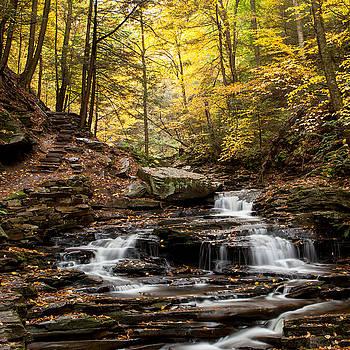 Seneca Falls by John Daly