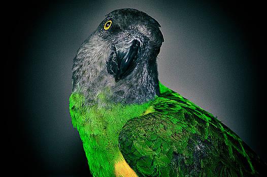 Senegal Green by Luke Aldington