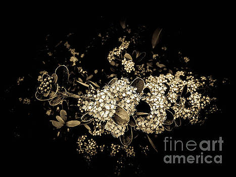 Sentimental Air by Fei A