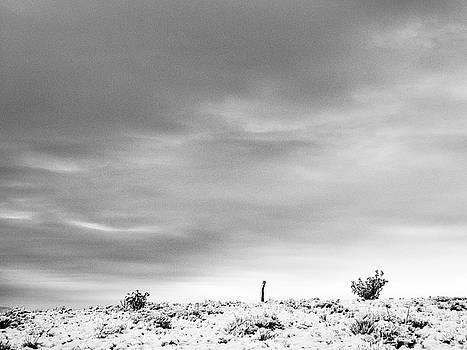 Mary Lee Dereske - Sentinel Against A Winter Sky